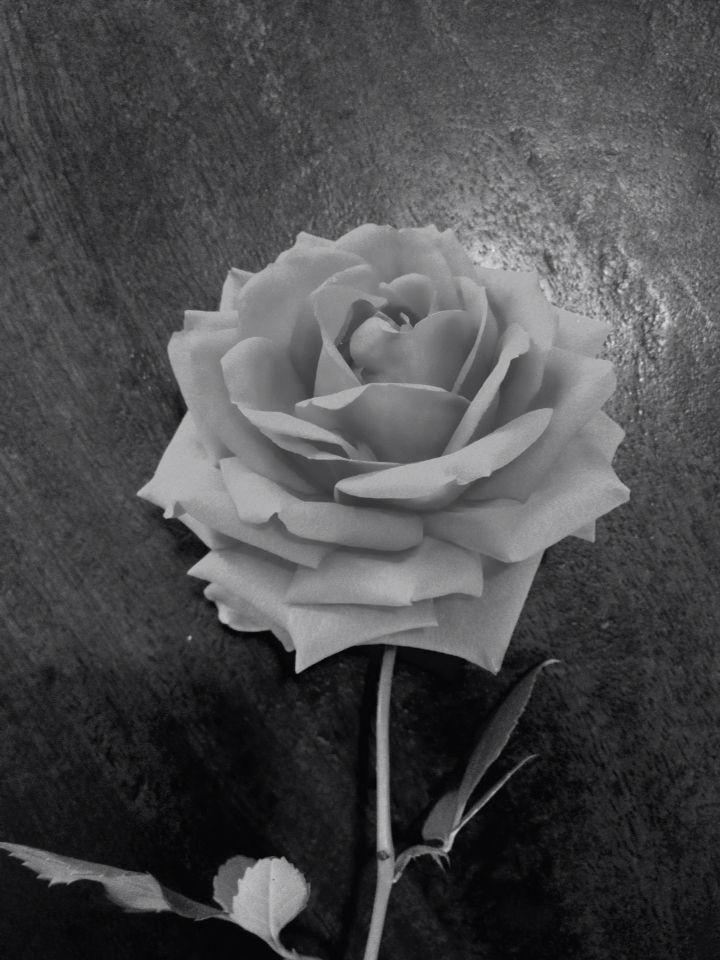 Wil je luizen uit je rozen weren!! Begraaf een bananenschil onder je rozen bij de stam. De bananenschil vergaat! Dus op tijd weer nieuwe schillen begraven!!