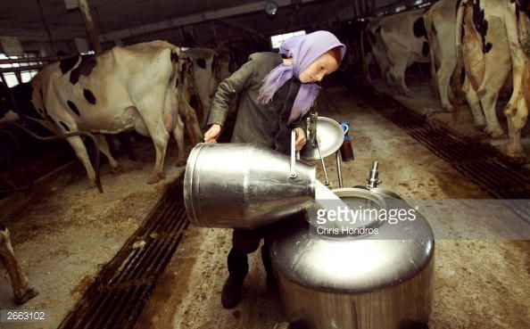 News Photo : Amish girl Elizabeth Stoltzfus pours milk after a...