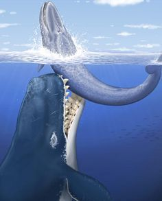 Facts About Leviathan, the Giant Prehistoric Whale #prehistoriccreatures