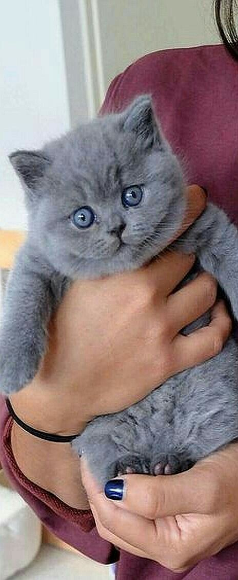 Pin By Nona Wafi On صور منوعــــه Cats And Kittens Kittens Kittens Cutest