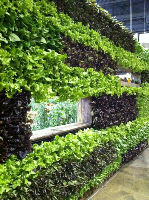 the lettuce wall from phs at the philadelphia intl flower show small space gardening