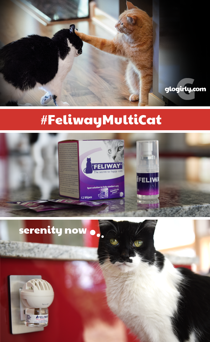The Secret To Peace And Harmony In Our Multicat Home Feliwaymulticat Spon Feliway Moving Stress Peace And Harmony Cat Health