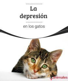 La depresión en los gatos La depresión en los gatos es algo muy común. Lee este artículo y encuentra algunas ideas para identificar la depresión felina y prevenirla.