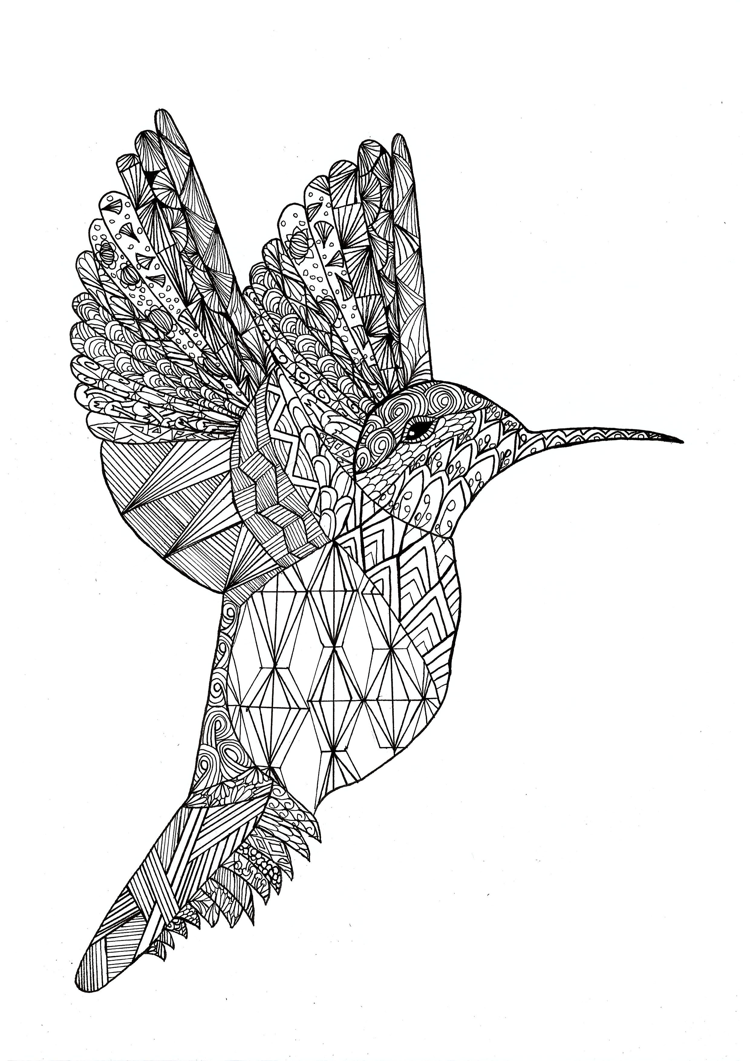 Coloring Page Of A Hummingbird In Zentangle Style