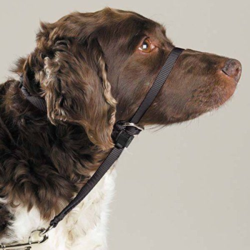 Gentle Leader Dog Head Collars Stop Pulling Lunging And Unwanted