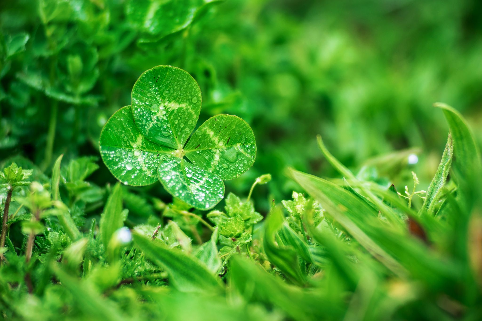 Hope luck to you by Etienne Regis on 500px