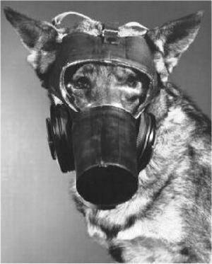 dog respirator mask