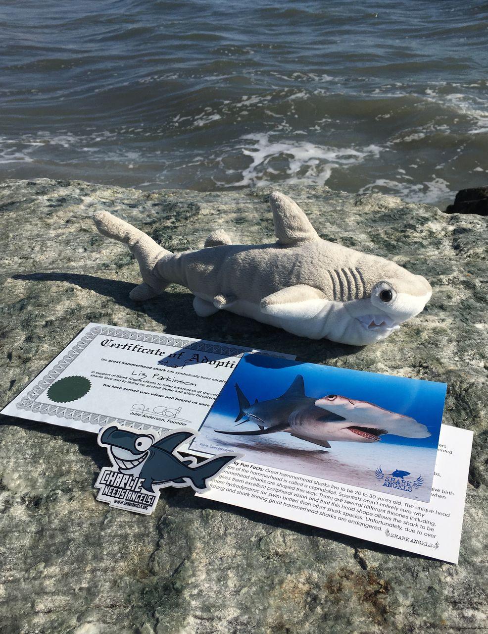 Hammerhead shark adoption shark adoption new shark