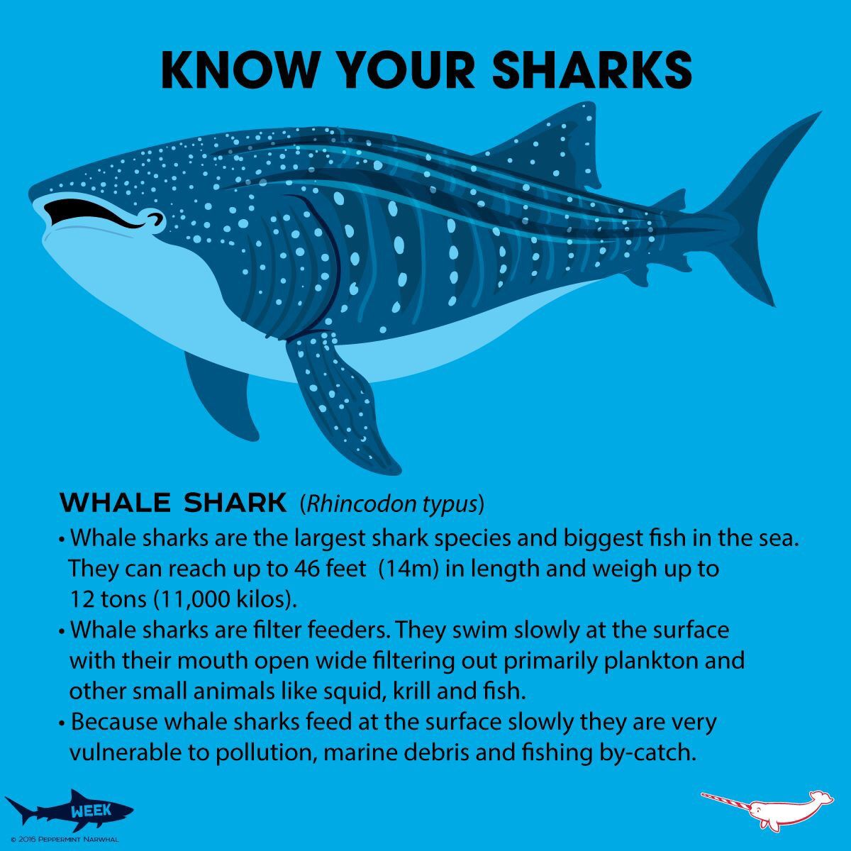 Know Your Whale Shark