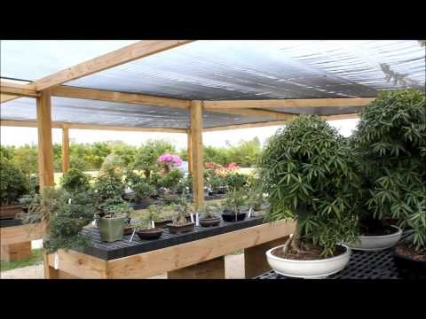 Florida Video Network Wigerts Bonsai Nursery North Fort