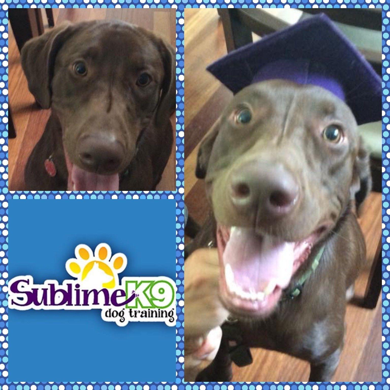 Long Island Dog Trainers Sublime K9 K9 Dog Training Dogs Dog