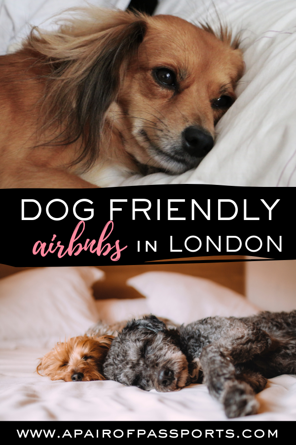 The Best Dog Friendly Airbnbs In London Dog Friendly Uk
