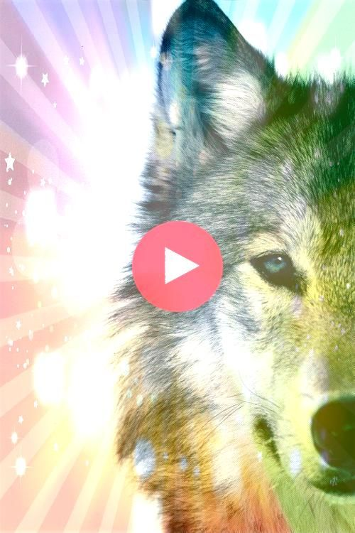 and beautiful and vital to the world mysterious and beautiful and vital to the worldmysterious and beautiful and vital to the world Wolves  Tumblr Cherokee Two Wolves Par...