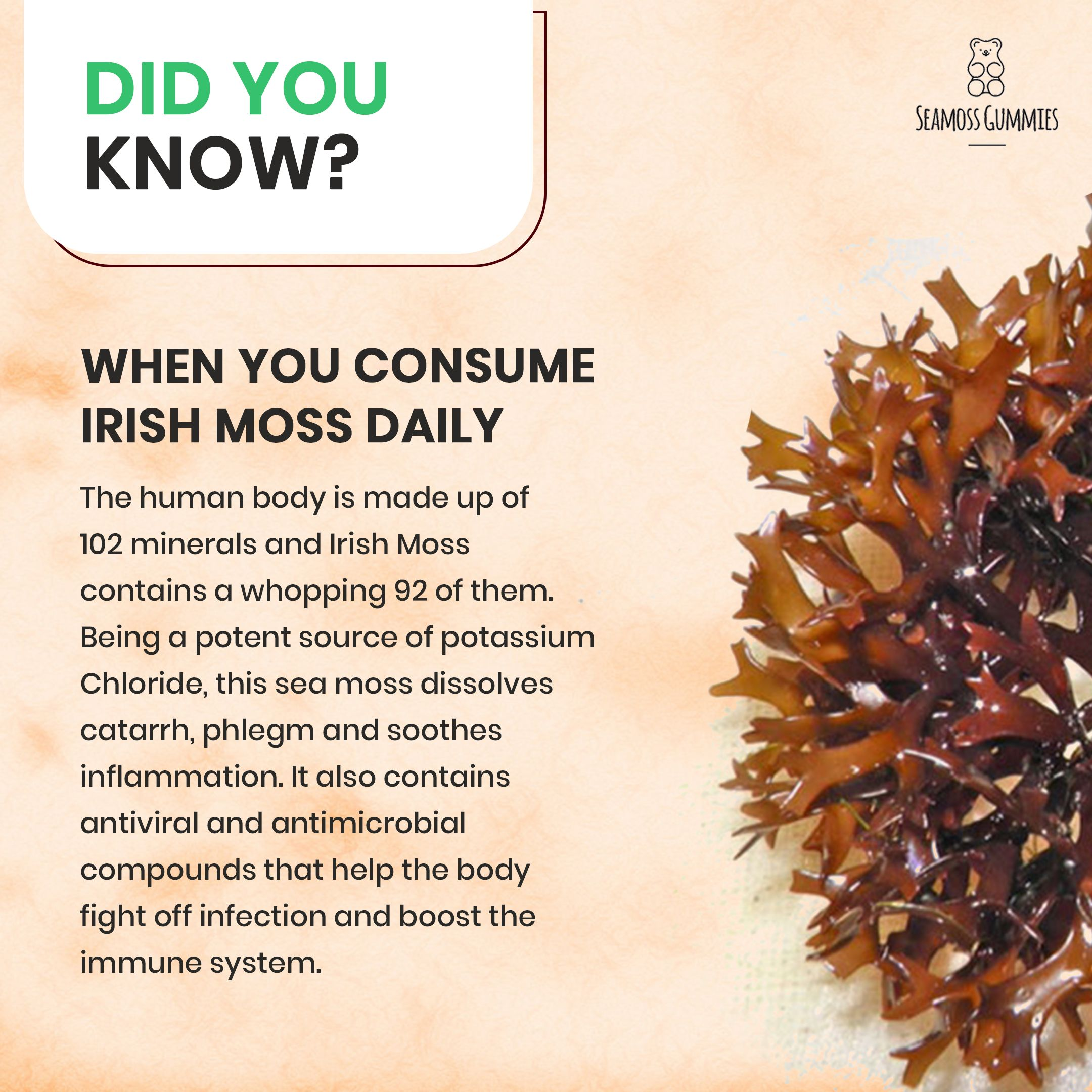 Sea Moss Benefits Sea Moss Nutrient Dense Food Moss