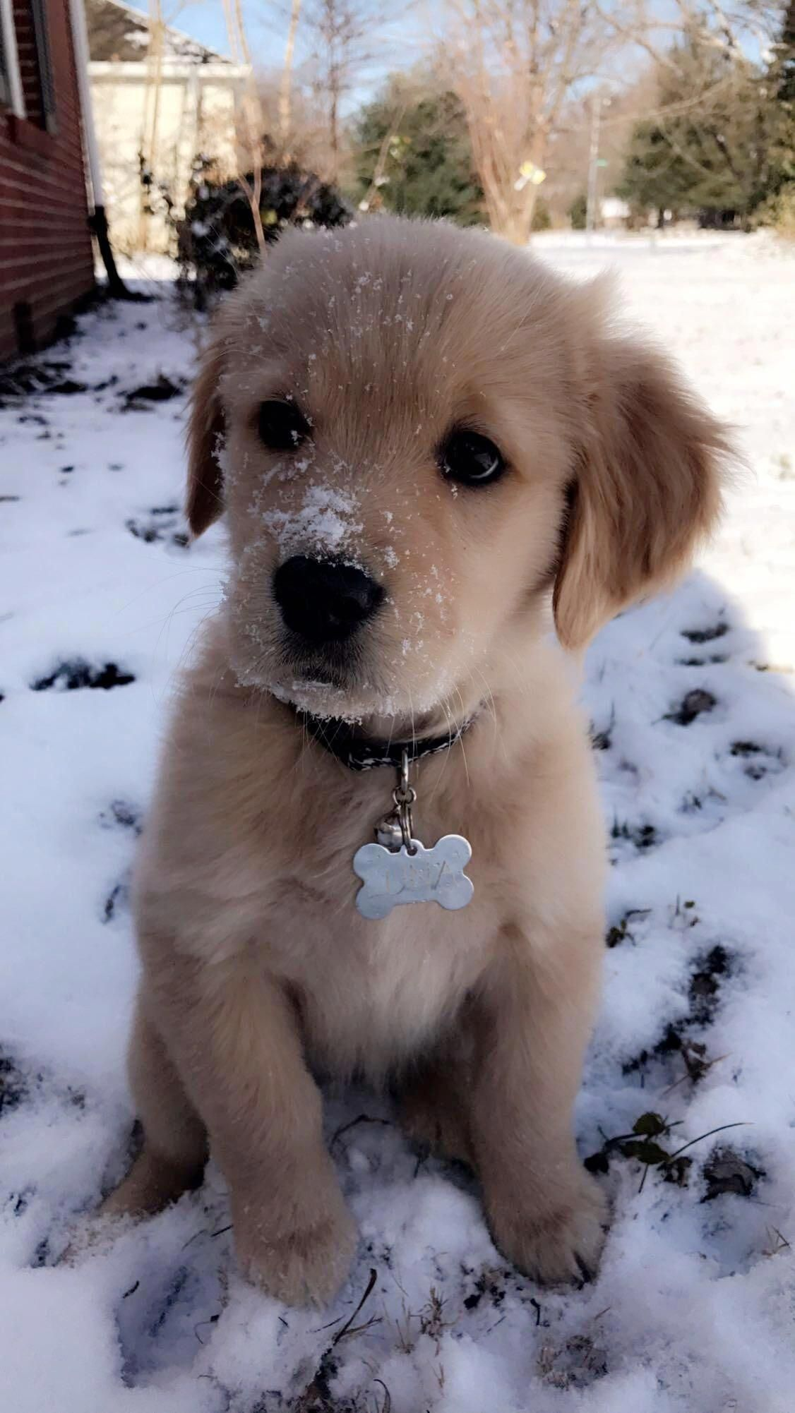 Receive Wonderful Suggestions On Golden Retrievers They Are