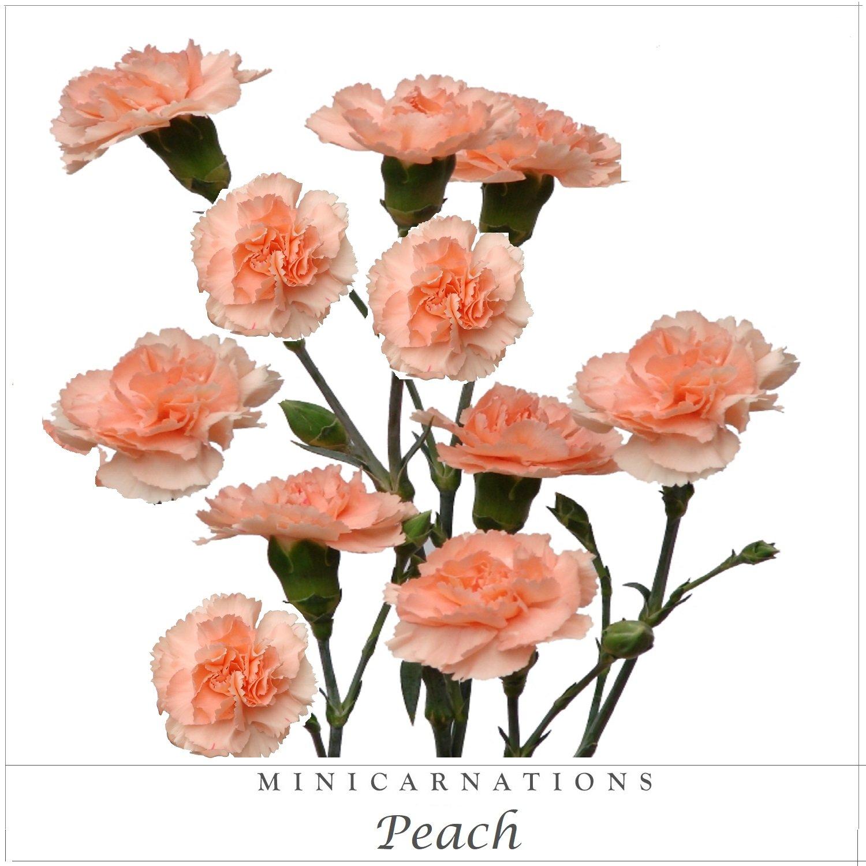 Mini Carnations Peach Ebloomsdirect Mini Carnations Carnation Flower Carnations
