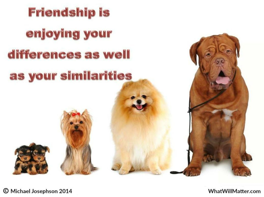 friendship embracing differences what will matter dog dad