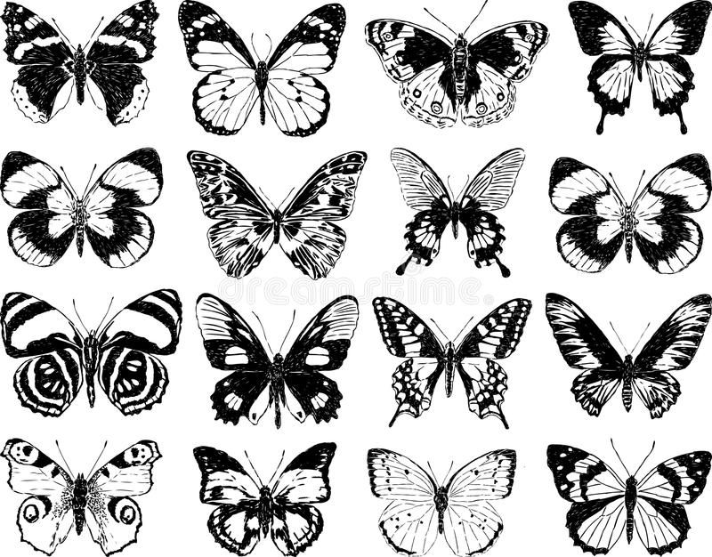 Photo of Butterflies silhouettes stock vector. Illustration of drawing – 52303189