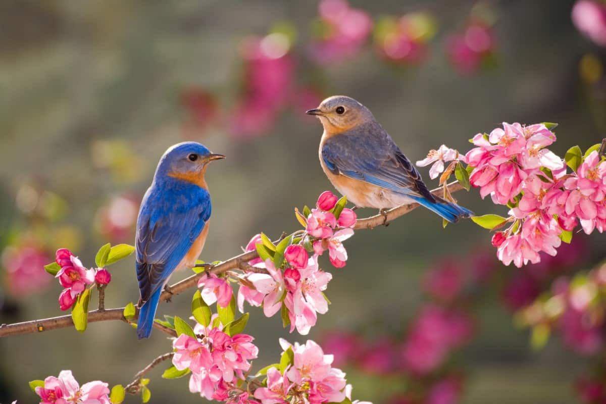 أهم تفسيرات رؤية العصفور في المنام لابن سيرين والنابلسي موقع مصري In 2021 Beautiful Birds Blue Bird Bird