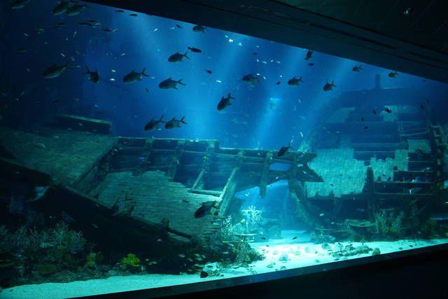 S E A Aquarium Shipwreck Strait Of Karimata And Java Sea