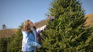 150 Doby Road Cameron Nc 28326 910 245 3265 Www Ncfarmfresh Com Farmmarketdisplay Asp Farmid 1848 Christmas Tree Farm Christmas Tress Tree Farms