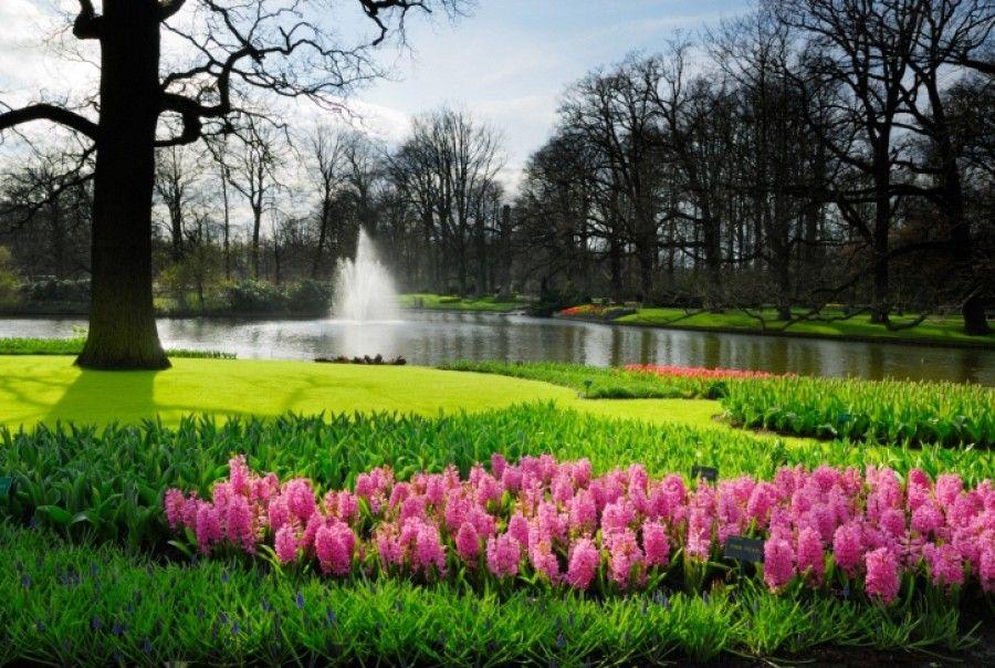 Keukenhof je největší květinový park v Holandsku, kterému se také říká příznačně zahrada Evropy. Je místem konání Květinového korza – slavností květin se vším všudy.