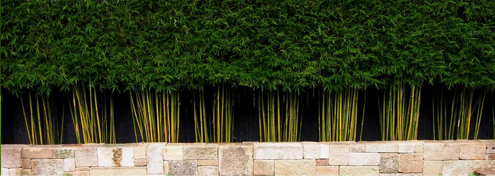 Image Of Live Bamboo Fence Garden Pinterest Bamboo Plants Bamboo Fence