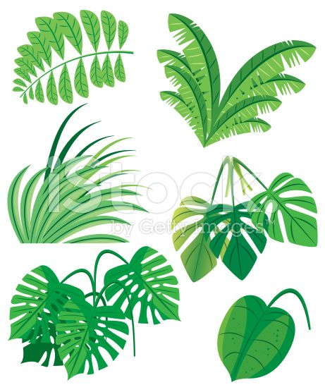 Feuille Illustration Vectorielle Plantes Tropicales Feuille