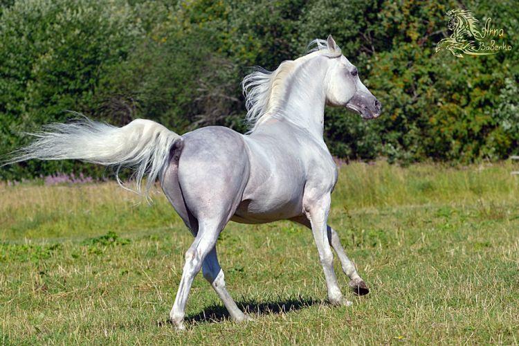 Gallery Ru Foto 190 Free Horse Anna Babenko Mit Bildern