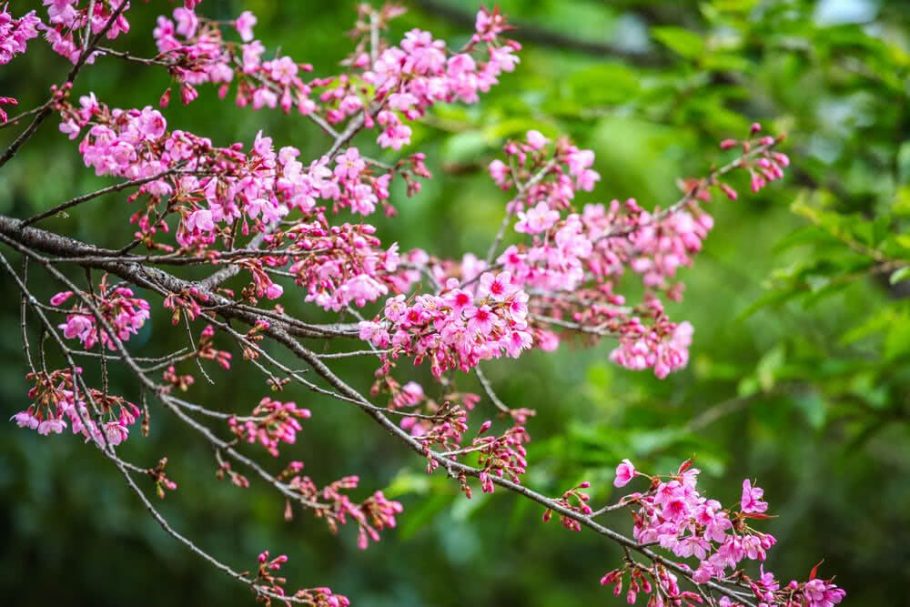Top 10 Beautiful Flowering Trees Of India Flowering Trees Ornamental Trees Indian Garden,How To Save A Dying Calathea Plant