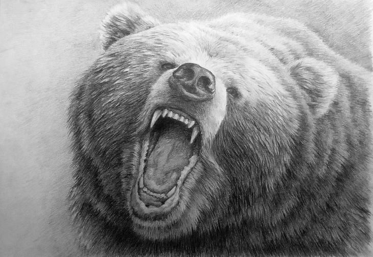 Картинки медведей в карандашей