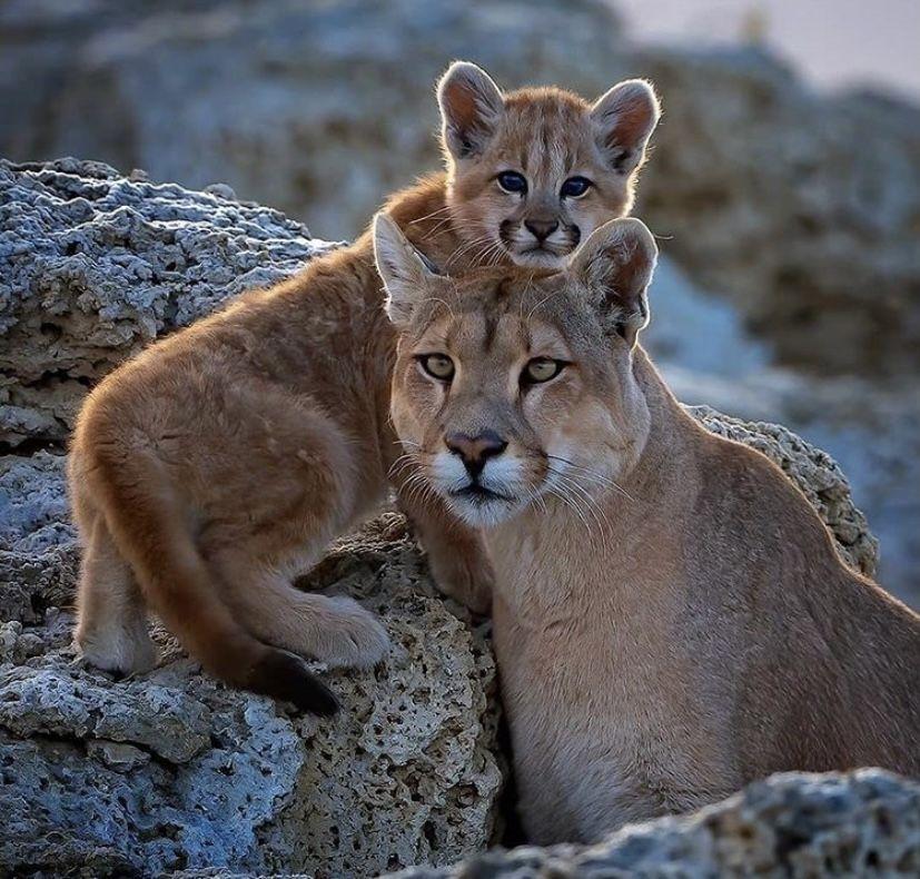 sexdating i lyngdal cougar i førde