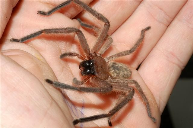 bbbbfb86ee7fb5272bcf4aeda6ec6441 - How To Get Rid Of Spiders From Your Car