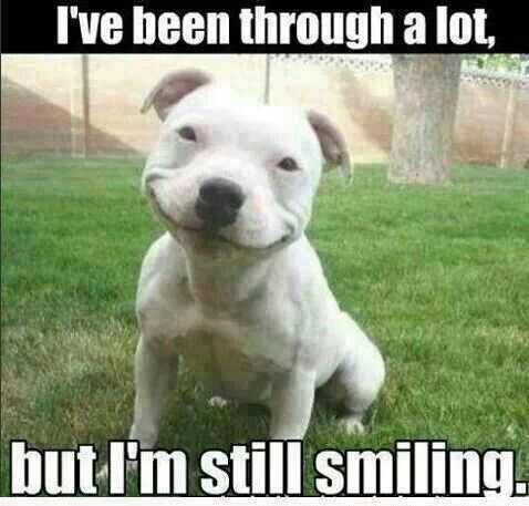 Cats And Dogs Fighting Quotes Google Search Happy Dogs