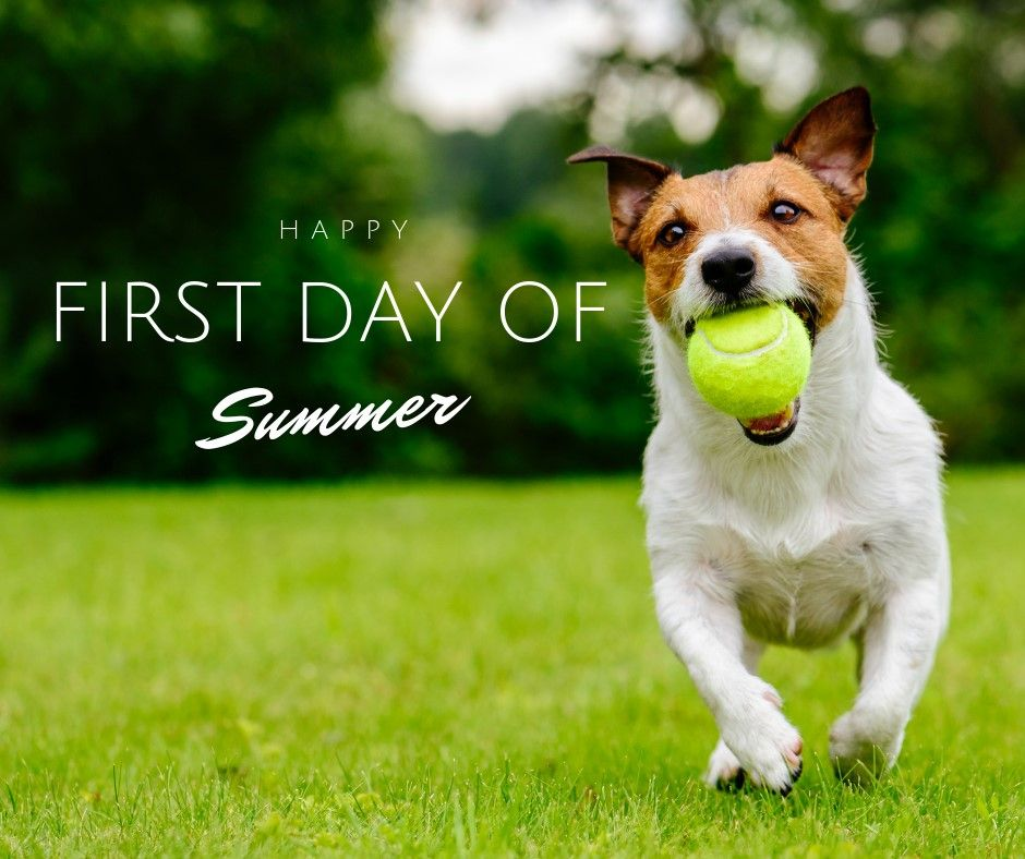 Happy First Day Of Summer First Day First Day Of Summer Summer Summertime Playtime Dog Do Veterinary Services First Day Of Summer Veterinarian