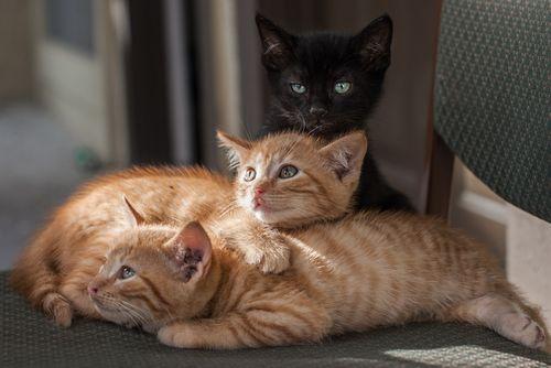 Tumblr Animaux Les Plus Mignons Cute Kittens Chats Adorables