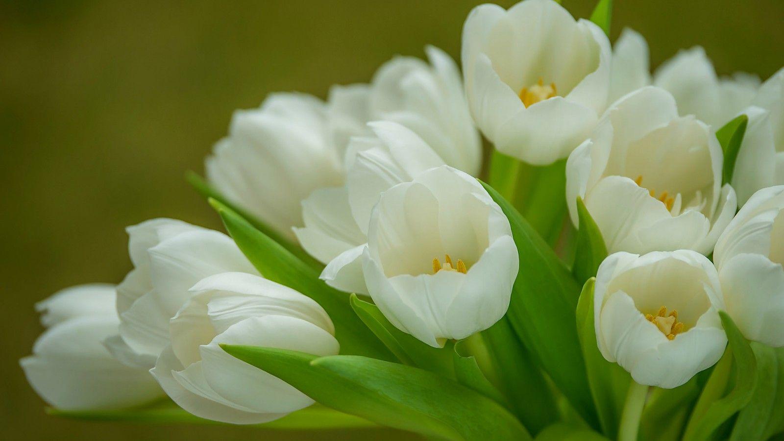 Цветы из квиллинга картинки для начинающих верхней части