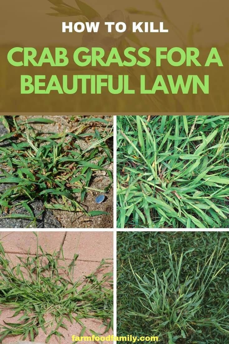 Obtain redirected below Landscaping Tips Crab grass