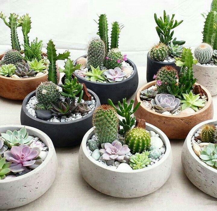 Imagen De Hacer Karaca En Suculent Jardineria En Macetas Plantas Suculentas