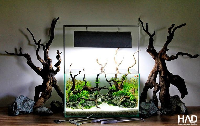 an idea for the smaller aquarium. #driftwood | aquariums, Wohnzimmer