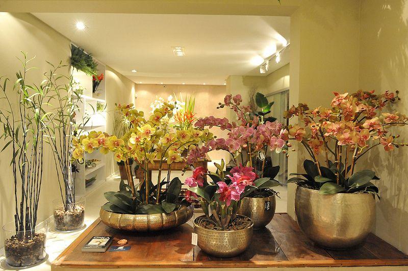 Orquídeas da Okka Interiores.