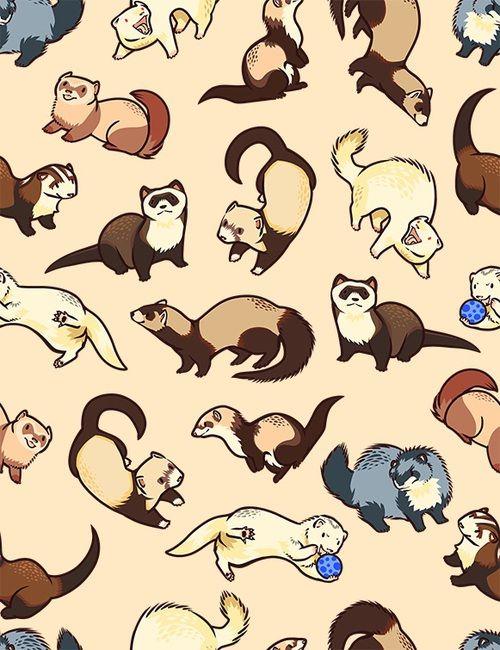 Image about ferret in A n ι м e by Meow on We Hear