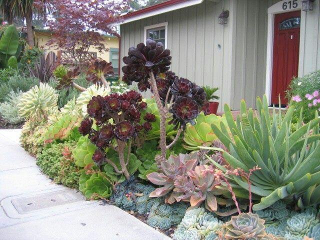 Big Succulents 10 Best Succulent Love Images On Pinterest