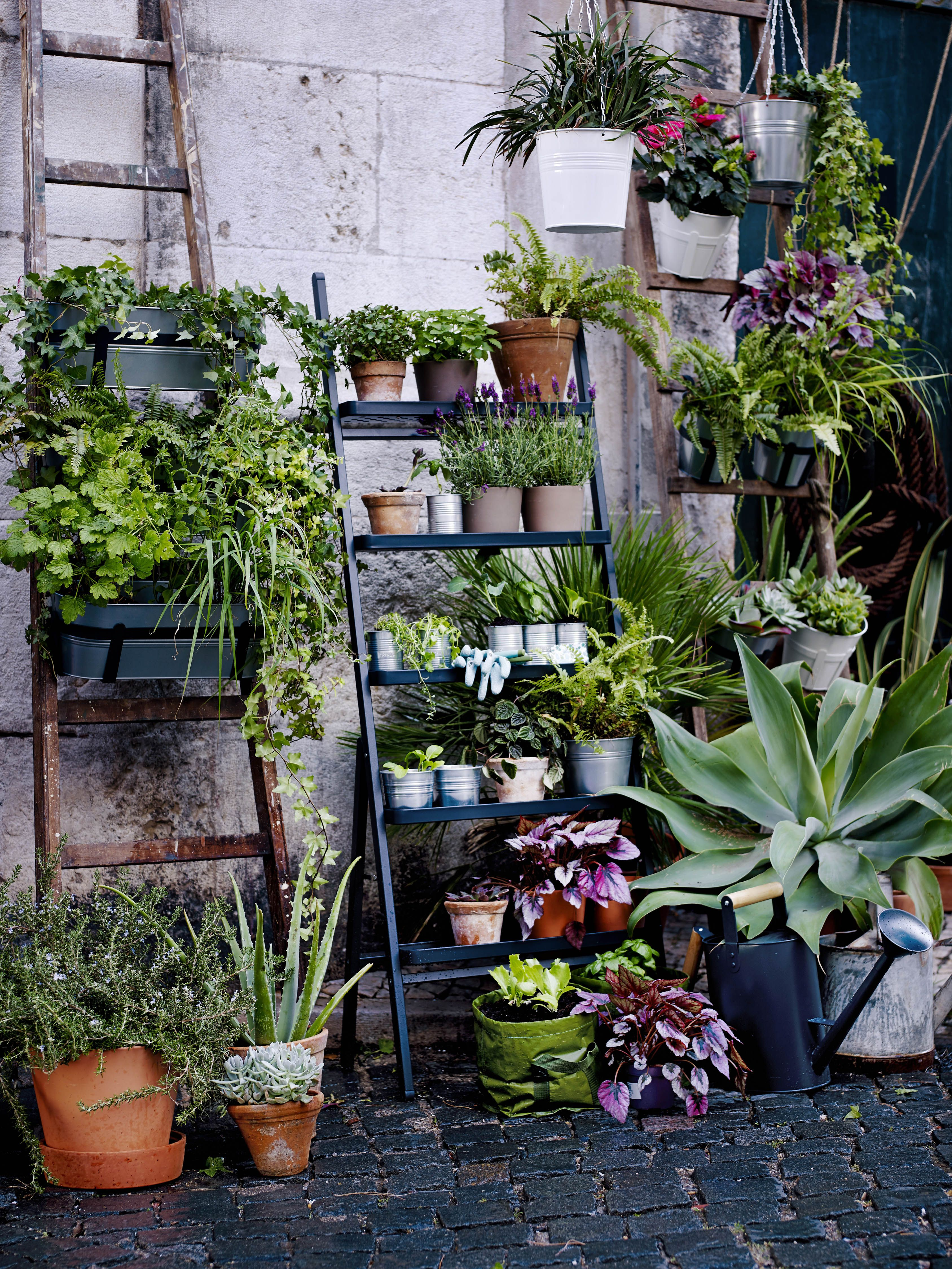 SALLADSK…L plantenstandaard