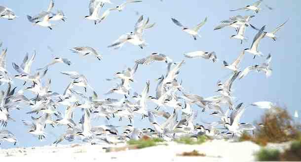 دليل لايفوتك جزيرة جانا من اجمل الجزر التابعة للملكة وتقع في الخليج العربي لايفوتك الاستمتاع بجمالها والتعرف على معالمها Outdoor Snow