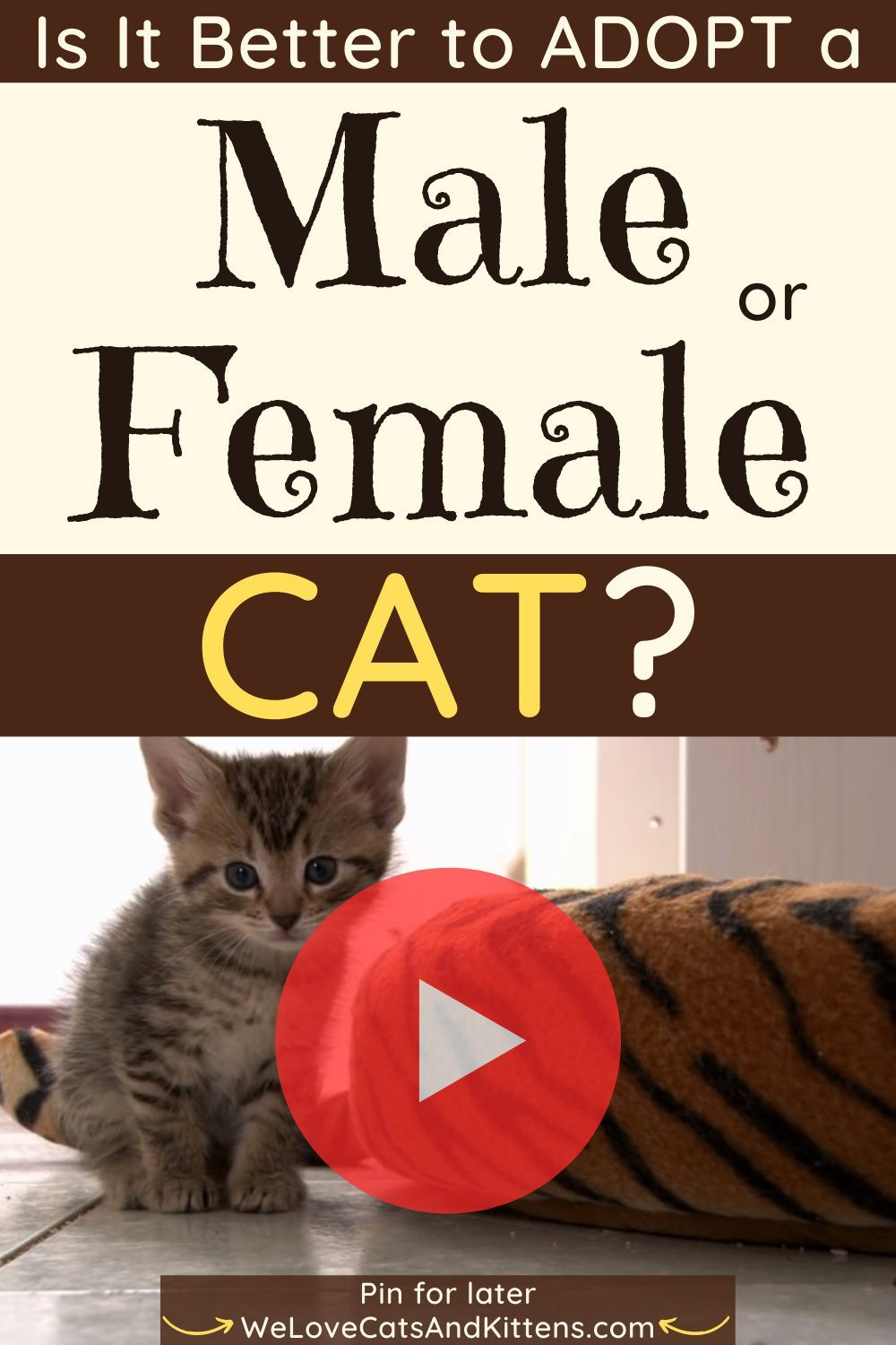 Is It Better To Adopt A Male Or Female Cat We Love Cats And Kittens In 2020 Cats And Kittens Cat Facts Cat Lady