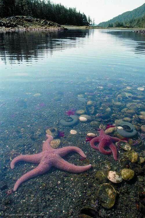 Pin Ot Polzovatelya Oleg Kozhushko Na Doske Gory I Ozera Morya I Reki V 2019 G Underwater World Ocean Creatures I Sea