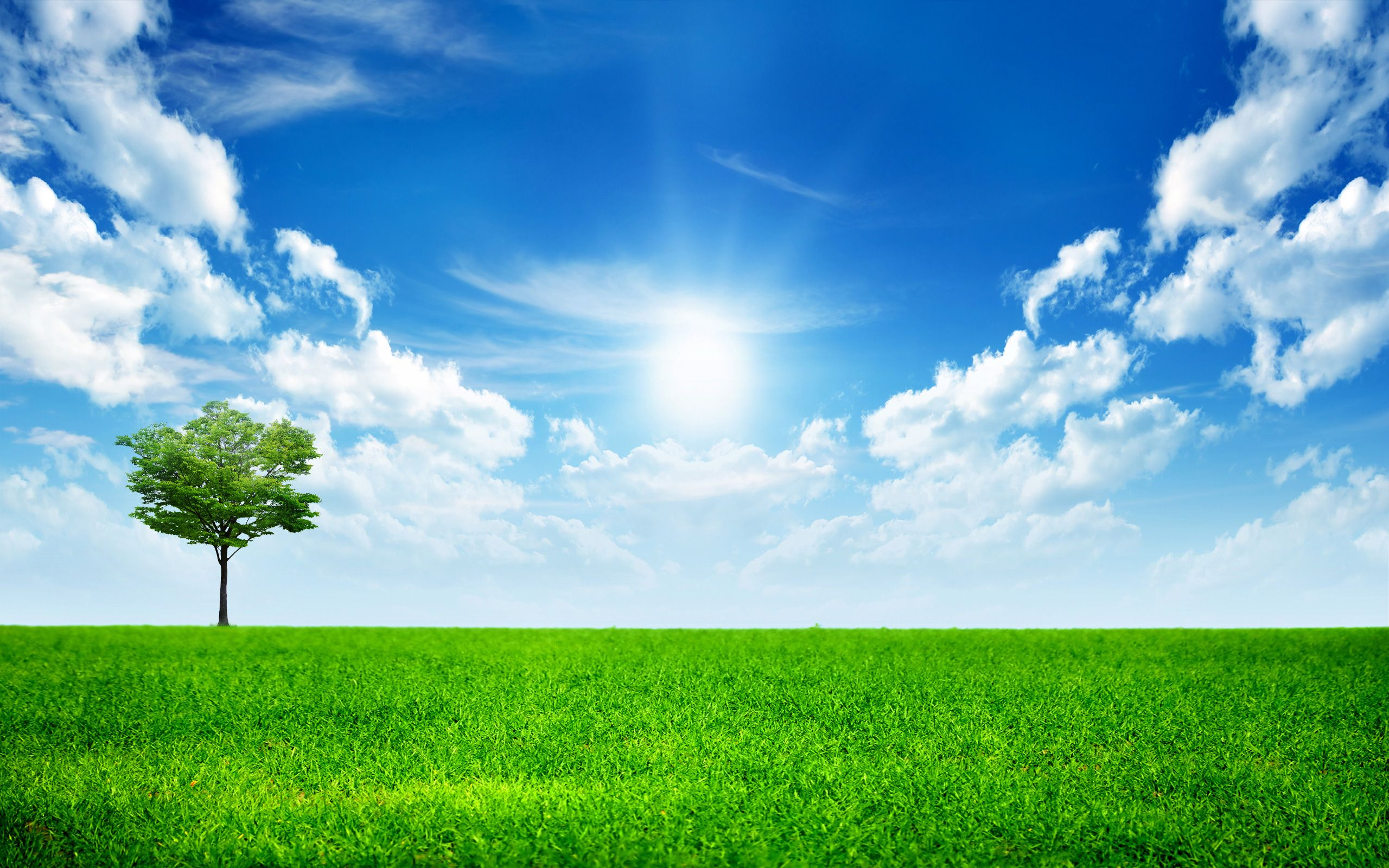 grass and sky backgrounds. Grasses Grass And Sky Backgrounds H