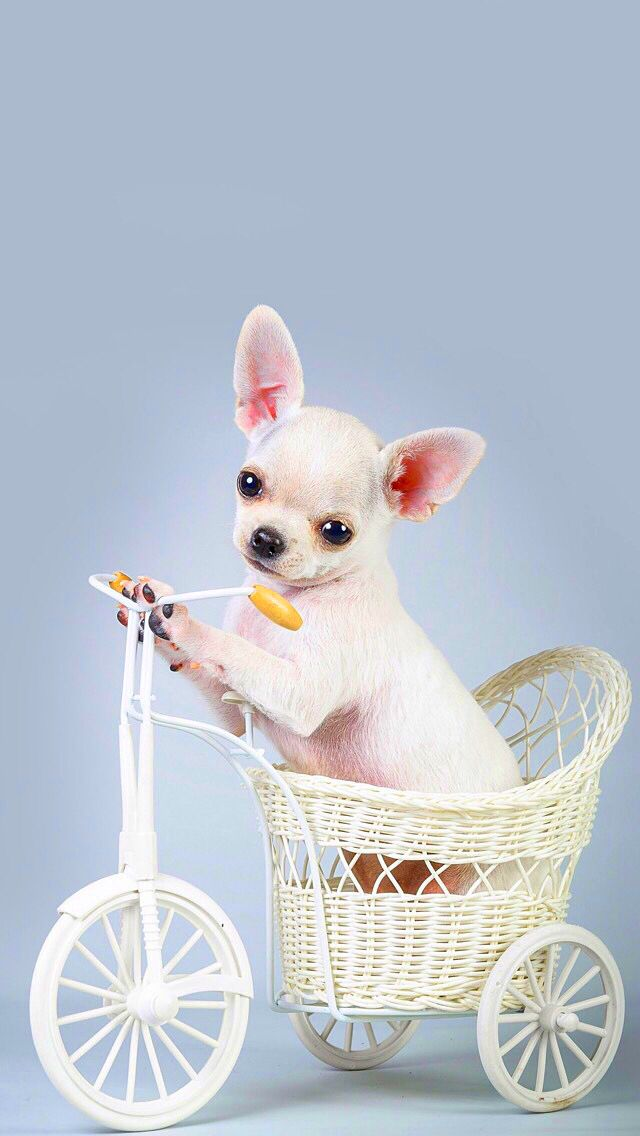Animals Wallpaper Iphone Dog Wallpaper Animal Wallpaper Cute Laptop Wallpaper Awesome cute dog wallpaper for iphone 6