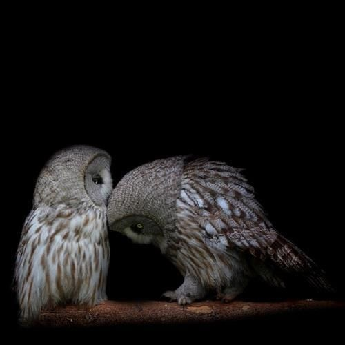 Pin By Magpie On Birds Bees With Images Owl Beautiful Owl